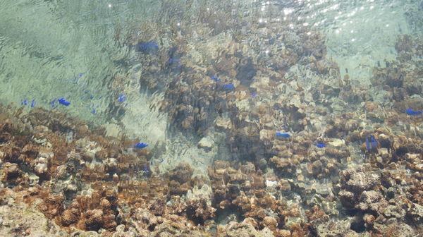 備瀬崎 熱帯魚