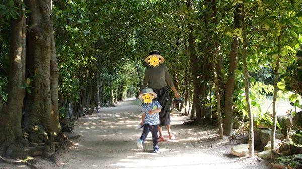 備瀬 フクギ並木の散策