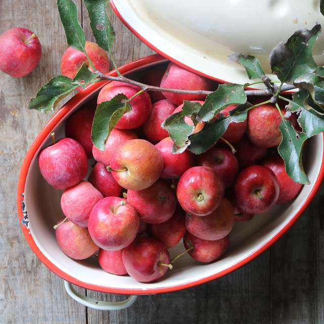姫りんごの写真
