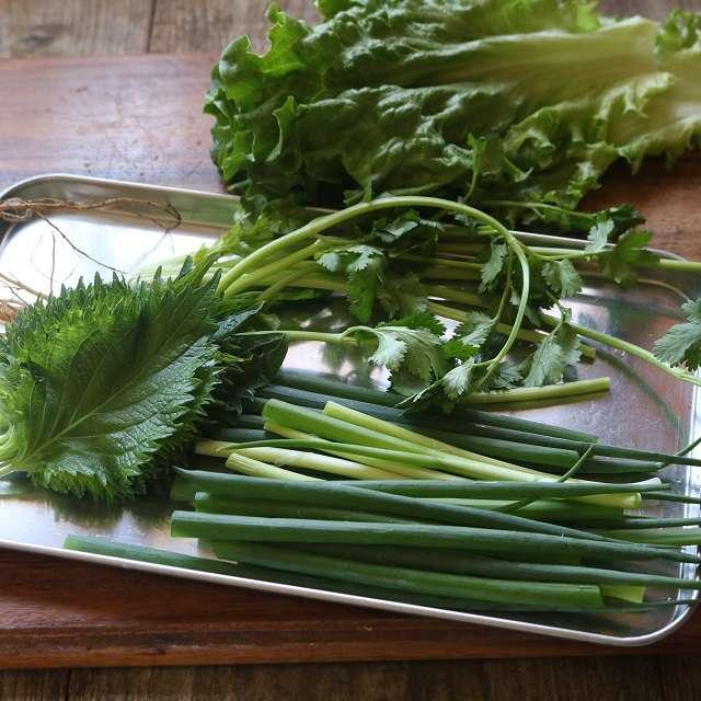 細ネギ、パクチーは9cm長さより長く切り、大葉とリーフレタスを洗っておく