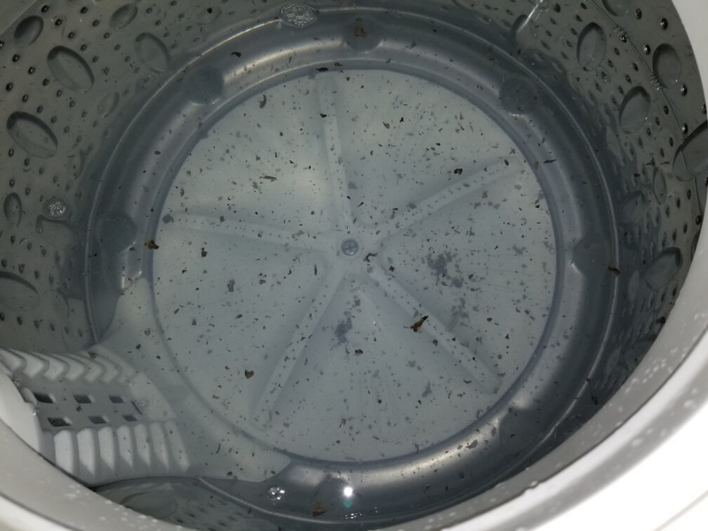 洗濯槽のカビ