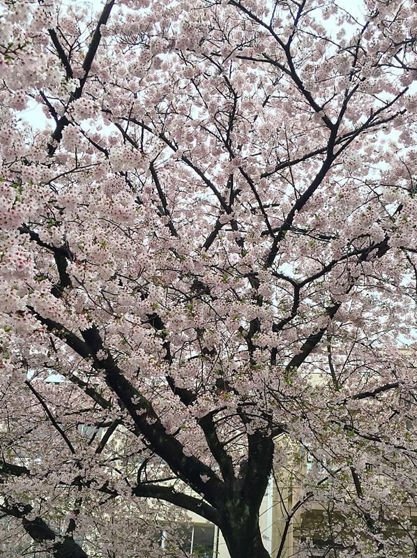 f:id:homuhomuHiro:20170411231743j:plain