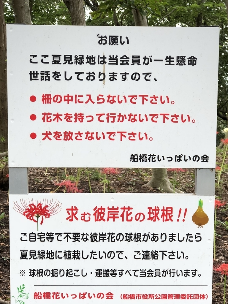 f:id:homuhomuHiro:20180920225211j:plain