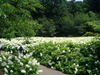 f:id:honda-jimusyo:20050625090918j:plain