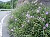 f:id:honda-jimusyo:20050811105120j:plain