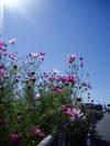 f:id:honda-jimusyo:20051023110119j:plain
