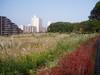 f:id:honda-jimusyo:20051113123500j:plain