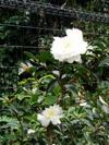 f:id:honda-jimusyo:20051113123827j:plain