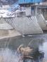 f:id:honda-jimusyo:20060122100511j:plain