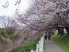 f:id:honda-jimusyo:20060326111012j:plain