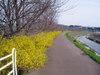 f:id:honda-jimusyo:20060326122440j:plain