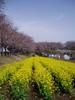 f:id:honda-jimusyo:20060329114211j:plain
