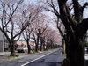 f:id:honda-jimusyo:20060329122445j:plain