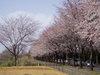 f:id:honda-jimusyo:20060329132159j:plain