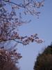 f:id:honda-jimusyo:20060401092349j:plain