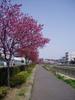 f:id:honda-jimusyo:20060401094600j:plain