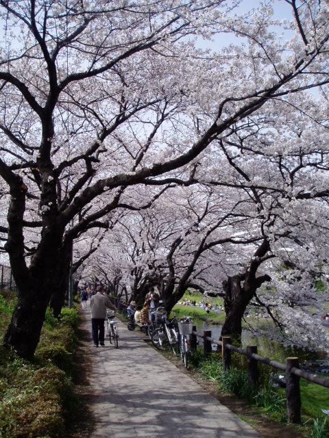 f:id:honda-jimusyo:20060401115712j:plain