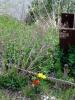 f:id:honda-jimusyo:20060409143158j:plain