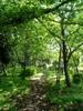 f:id:honda-jimusyo:20060503123905j:plain