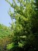 f:id:honda-jimusyo:20060504094046j:plain