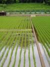 f:id:honda-jimusyo:20060610075706j:plain