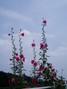 f:id:honda-jimusyo:20060624110657j:plain