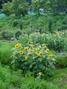 f:id:honda-jimusyo:20060624110924j:plain