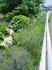 f:id:honda-jimusyo:20060624111445j:plain