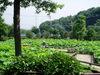 f:id:honda-jimusyo:20060715080257j:plain