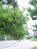 f:id:honda-jimusyo:20060729095637j:plain