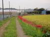 f:id:honda-jimusyo:20060930135358j:plain