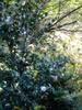 f:id:honda-jimusyo:20061008125631j:plain
