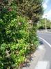 f:id:honda-jimusyo:20061109120307j:plain