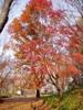 f:id:honda-jimusyo:20061216084039j:plain