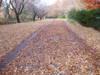 f:id:honda-jimusyo:20061216090214j:plain