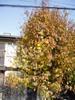f:id:honda-jimusyo:20061216101709j:plain
