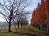 f:id:honda-jimusyo:20061216102912j:plain