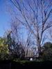 f:id:honda-jimusyo:20070107102851j:plain