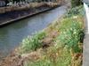 f:id:honda-jimusyo:20070107110432j:plain