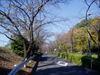 f:id:honda-jimusyo:20071118115137j:plain