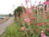 f:id:honda-jimusyo:20090614094519j:plain