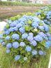 f:id:honda-jimusyo:20090614095338j:plain