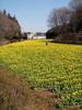 f:id:honda-jimusyo:20100314113144j:plain