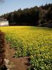 f:id:honda-jimusyo:20100314113250j:plain