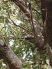 f:id:honda-jimusyo:20100320143923j:plain