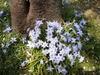 f:id:honda-jimusyo:20100410103841j:plain