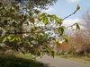 f:id:honda-jimusyo:20100410110755j:plain