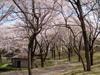 f:id:honda-jimusyo:20100410113347j:plain