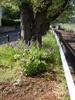f:id:honda-jimusyo:20100425152937j:plain