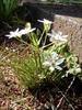 f:id:honda-jimusyo:20100425153226j:plain